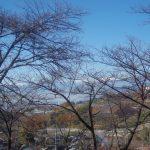 야마나시의 하쿠슈 증류소